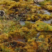 Range of browns, yellows and greens